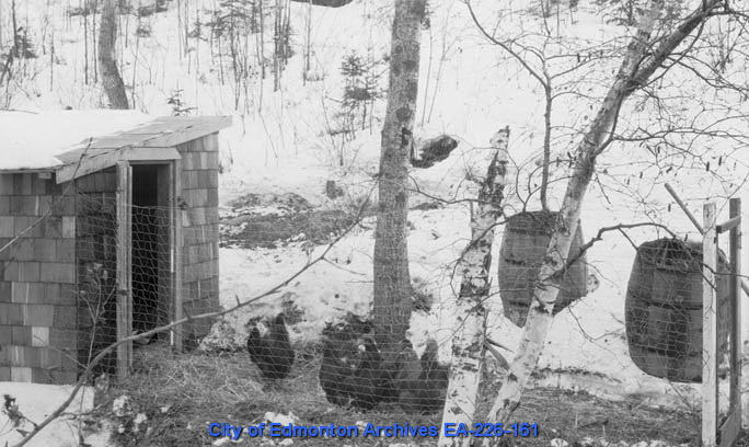 "EA-226-161 ""Chicken House"" ca. 1920 This picture, of a chicken coop in Mill Creek, shows that chickens are hardier than I realized"