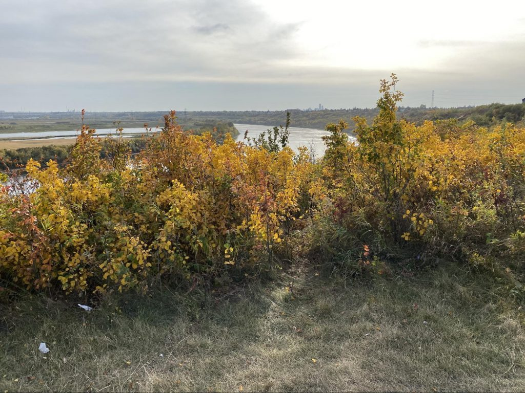 Fall foliage with the river and Edmonton downotwn skyline in the distance