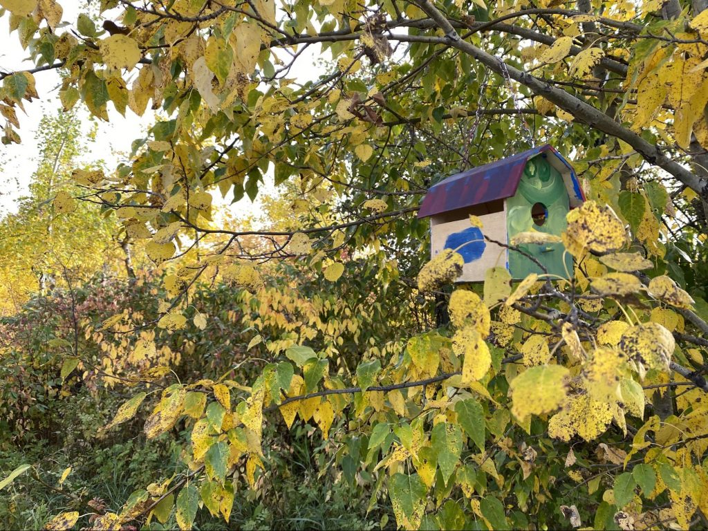 Painted wood bird house in a tree with green and yellow leaves.