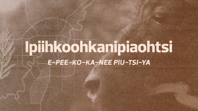 Ipiihkoohkanipiaohtsi Ward: The migration of the bison north for calvingE-PEE-KO-KA-NEE-PIU-TSI- YA