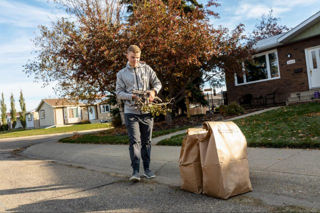From garden to curb and back: the journey of yard waste in Edmonton