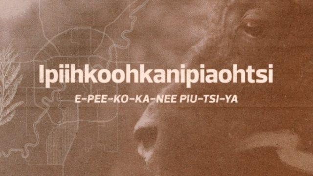Ipiihkoohkanipiaohtsi Ward: The migration of the bison north for calving E-PEE-KO-KA-NEE-PIU-TSI- YA