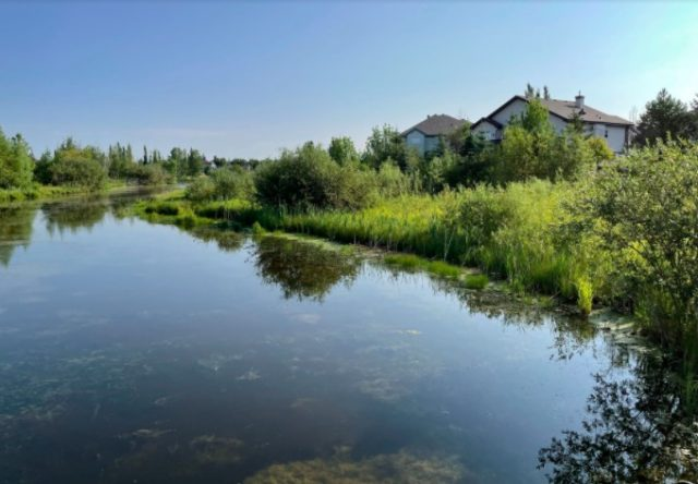 Naturalization at stormwater ponds in Edmonton a good use of resources. And birds like it